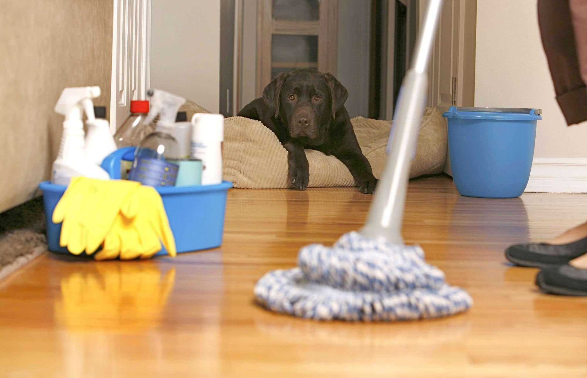 Igiene e pulizia a casa – i trucchi per prevenire le malattie