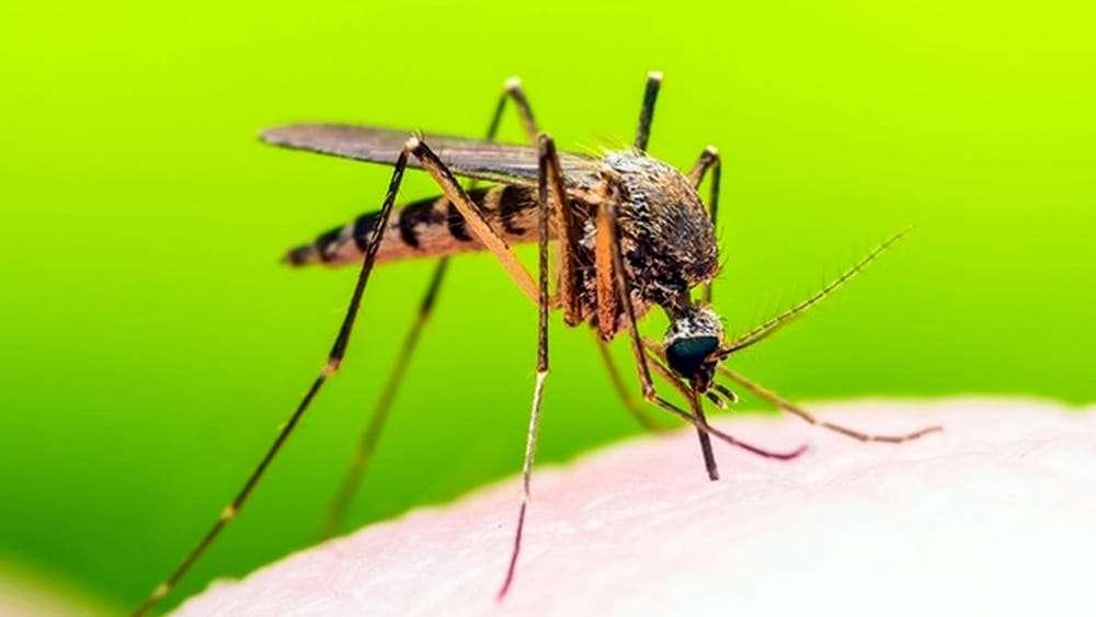 Rimedi anti zanzare  – i migliori accessori
