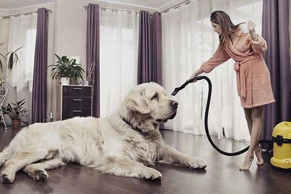 Accessori Per Animali Domestici – I migliori per la pulizia della casa