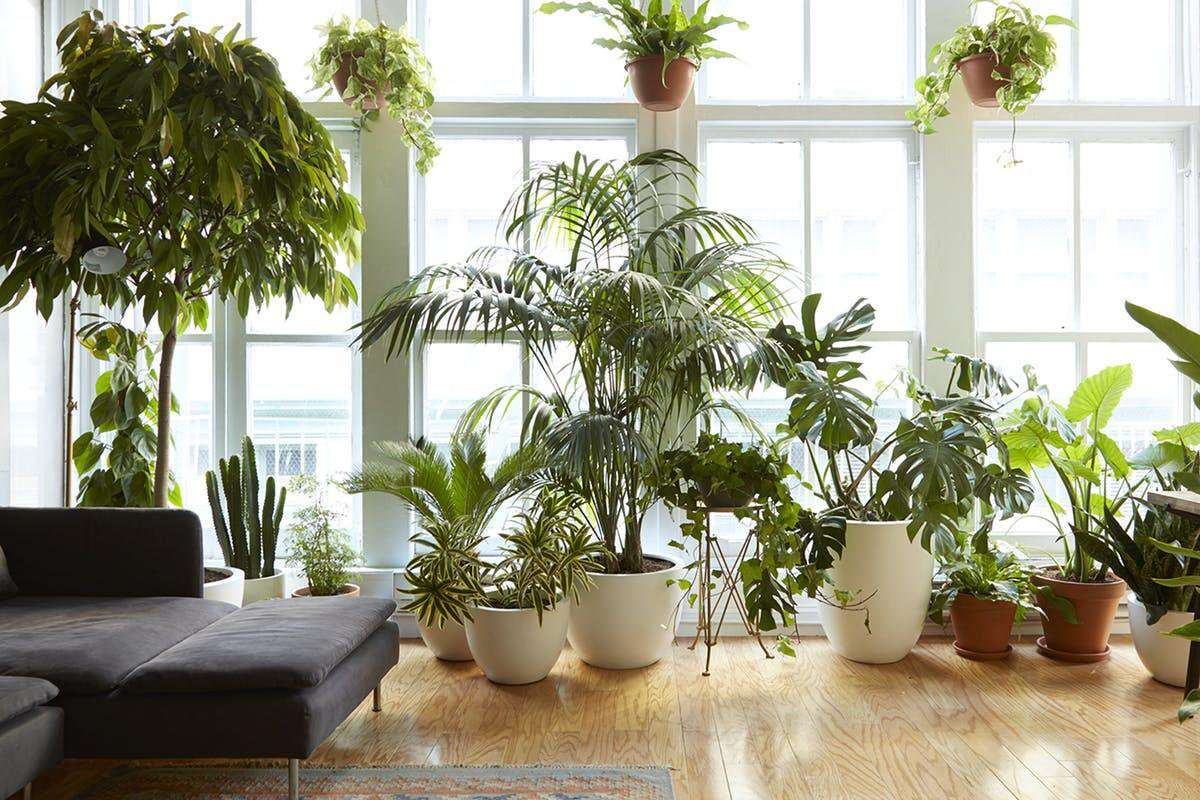 5 vasi originali per le tue piante in casa- Arredamento green